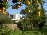 ibiza orangenseite haus